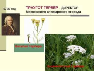 1739 ГОД ТРАУГОТ ГЕРБЕР – ДИРЕКТОР Московского аптекарского огорода ВасилекГ