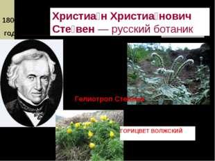 1800 – 1806 годы Христиа́н Христиа́нович Сте́вен—русскийботаник Гелиотроп