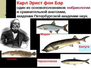 1853-1856 год Карл Эрнст фон Бэр один из основоположниковэмбриологии исра