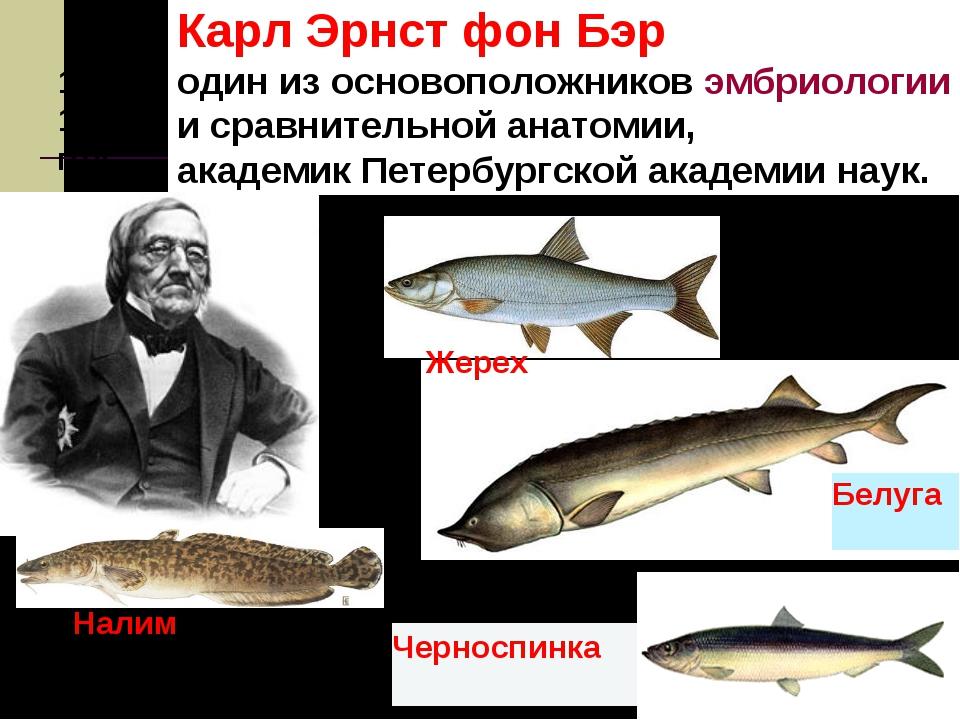 1853-1856 год Карл Эрнст фон Бэр один из основоположниковэмбриологии исра...