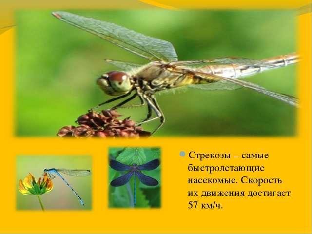 Стрекозы – самые быстролетающие насекомые. Скорость их движения достигает 57...