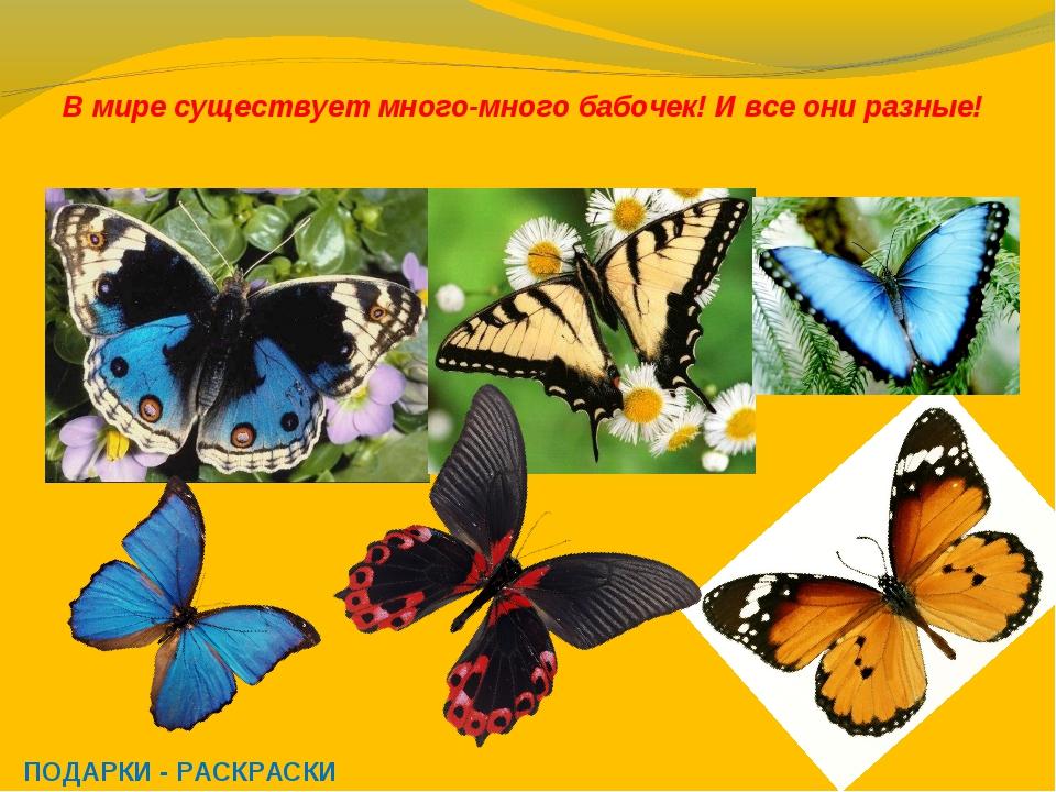 В мире существует много-много бабочек! И все они разные! ПОДАРКИ - РАСКРАСКИ