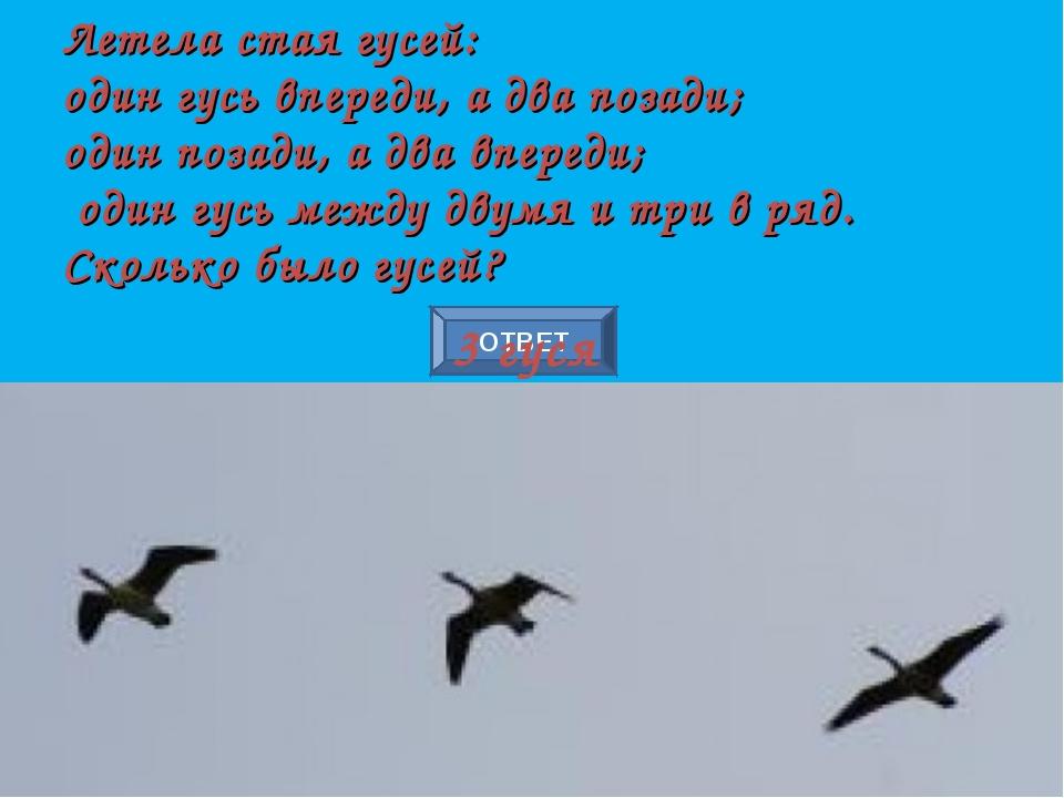 ОТВЕТ Летела стая гусей: один гусь впереди, а два позади; один позади, а два...