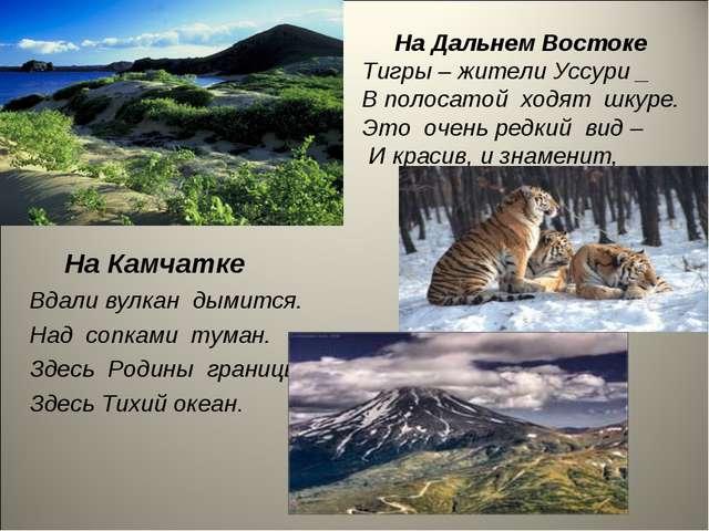 На Дальнем Востоке Тигры – жители Уссури _ В полосатой ходят шкуре. Это очен...