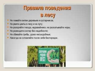Правила поведения в лесу Не ломайте ветви деревьев и кустарников; Не рвите цв