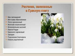 Растения, занесенные в Красную книгу Мак лапландский Меч-трава обыкновенная Л