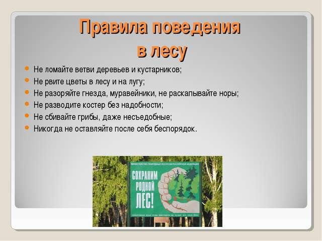 Правила поведения в лесу Не ломайте ветви деревьев и кустарников; Не рвите цв...