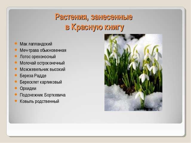 Растения, занесенные в Красную книгу Мак лапландский Меч-трава обыкновенная Л...