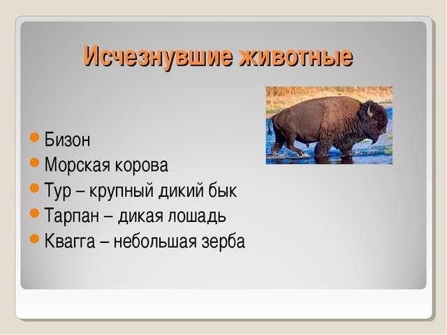Исчезнувшие животные Бизон Морская корова Тур – крупный дикий бык Тарпан – ди...