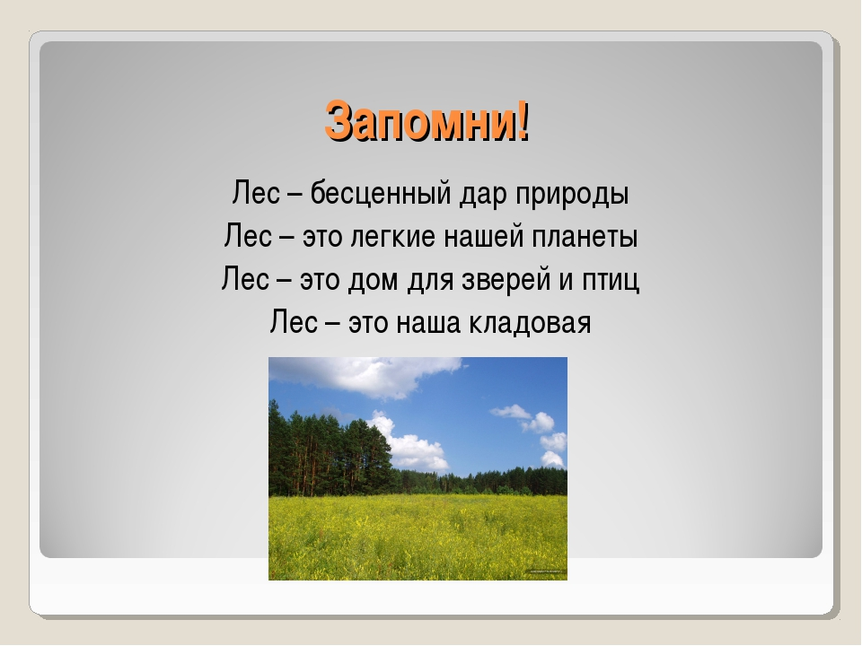 Запомни! Лес – бесценный дар природы Лес – это легкие нашей планеты Лес – это...