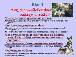 Шаг 1 Как взаимодействуют собаки и люди? * Безнадзорные домашние собаки Имею
