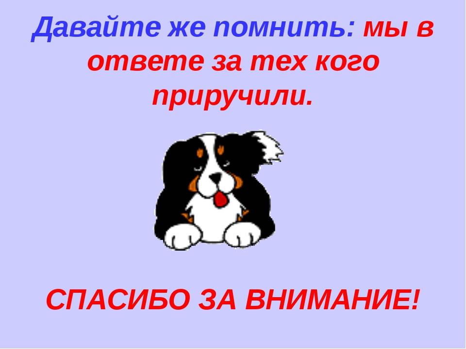 возникновении картинка собаки спасибо за внимание его