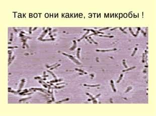 Так вот они какие, эти микробы !