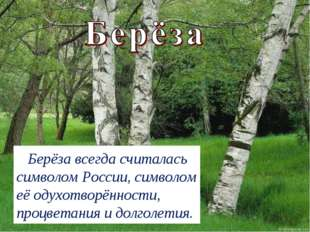 Берёза всегда считалась символом России, символом еёодухотворённости, процв