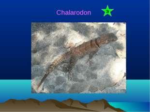 Chalarodon Э