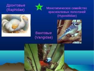 Дронтовые (Raphidae) Монотипическое семейство красноклювых поползней (Hyposit