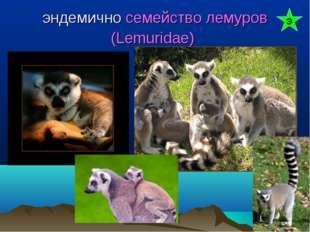 эндемично семейство лемуров (Lemuridae) Э