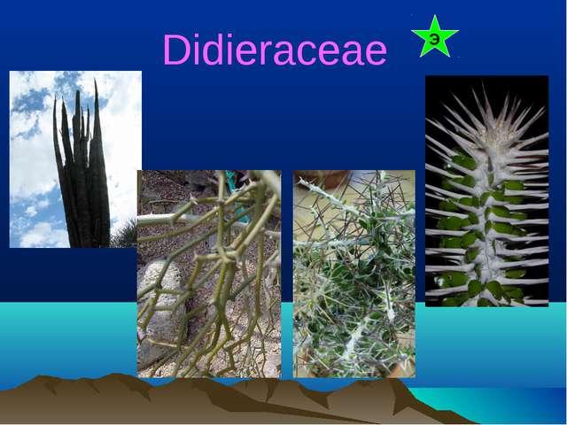 Didieraceae Э