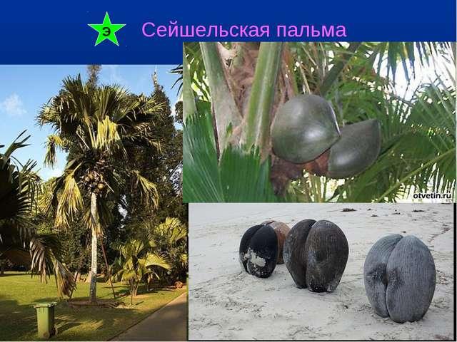 Сейшельская пальма Э