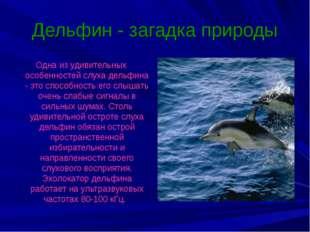 Дельфин - загадка природы Одна из удивительных особенностей слуха дельфина -