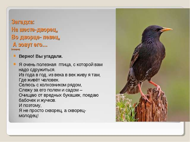 Загадка: На шесте-дворец, Во дворце- певец, А зовут его… (скворец) Верно! Вы...