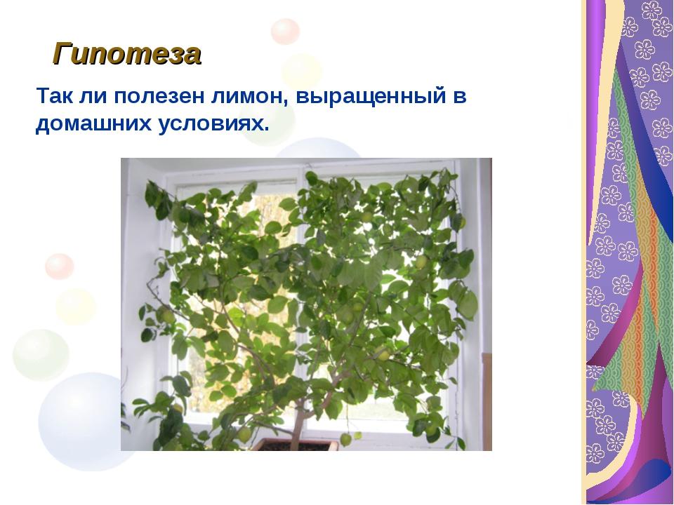 Гипотеза Так ли полезен лимон, выращенный в домашних условиях.