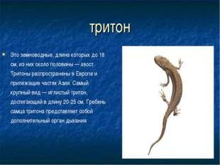 тритон Это земноводные, длина которых до 18 см, из них около половины — хвост