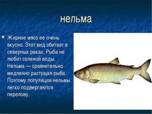 нельма Жирное мясо ее очень вкусно. Этот вид обитает в северных реках. Рыба н