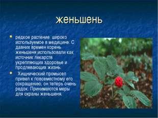 женьшень редкое растение широко используемое в медицине. С давних времен коре