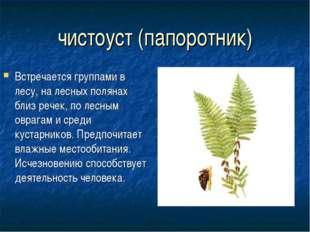 чистоуст (папоротник) Встречается группами в лесу, на лесных полянах близ реч