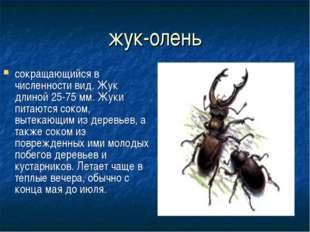 жук-олень сокращающийся в численности вид. Жук длиной 25-75 мм. Жуки питаются
