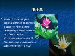лотос редкое, красиво цветущее водное и околоводное растение. В древности лот