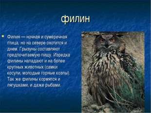 филин Филин — ночная и сумеречная птица, но на севере охотится и днем. Грызун