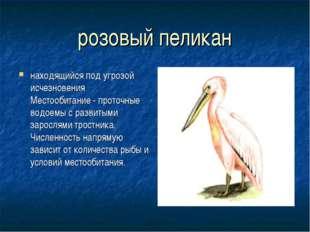 розовый пеликан находящийся под угрозой исчезновения Местообитание - проточны