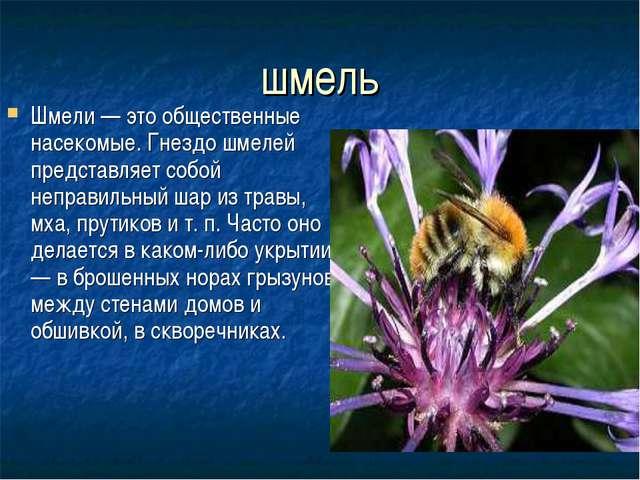 шмель Шмели — это общественные насекомые. Гнездо шмелей представляет собой не...