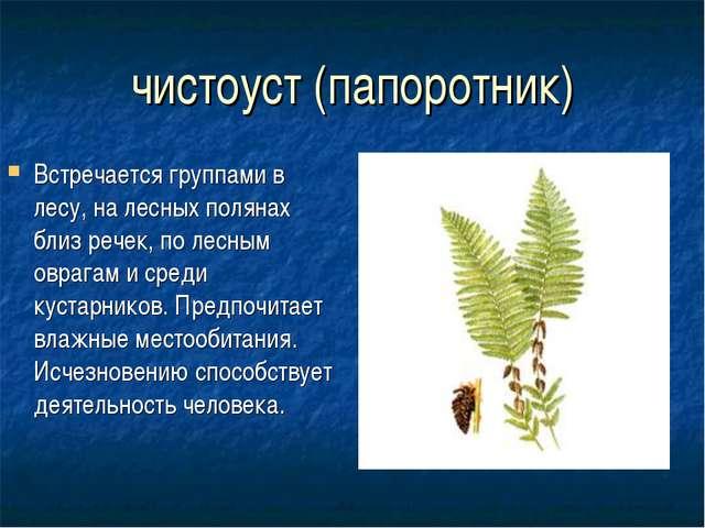 чистоуст (папоротник) Встречается группами в лесу, на лесных полянах близ реч...