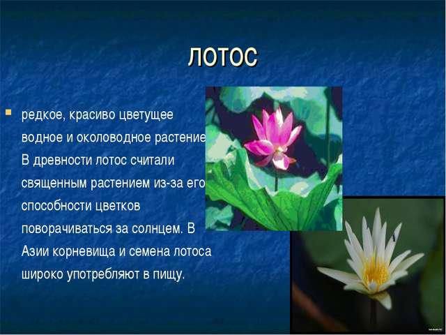 лотос редкое, красиво цветущее водное и околоводное растение. В древности лот...