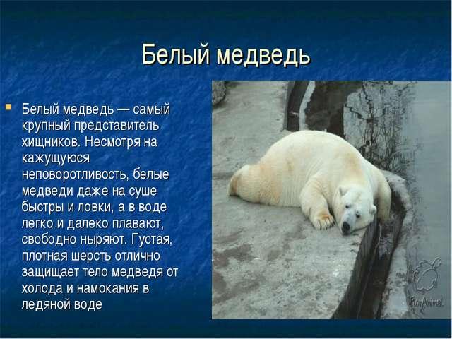 Белый медведь Белый медведь — самый крупный представитель хищников. Несмотря...