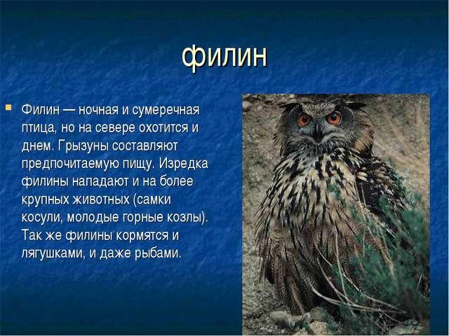 филин Филин — ночная и сумеречная птица, но на севере охотится и днем. Грызун...