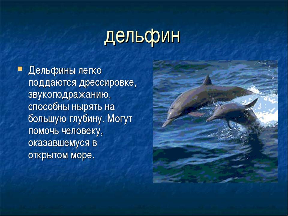 дельфин Дельфины легко поддаются дрессировке, звукоподражанию, способны нырят...