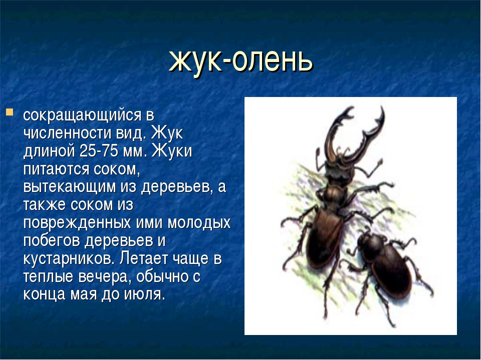 Что едят жуки олени в домашних условиях
