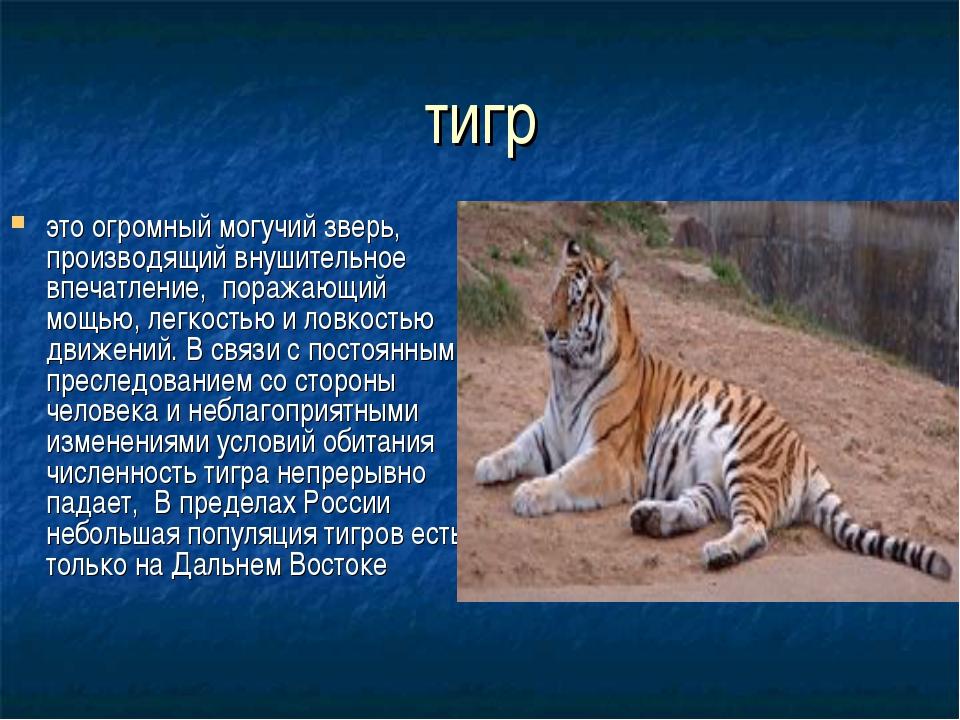 тигр это огромный могучий зверь, производящий внушительное впечатление, пораж...