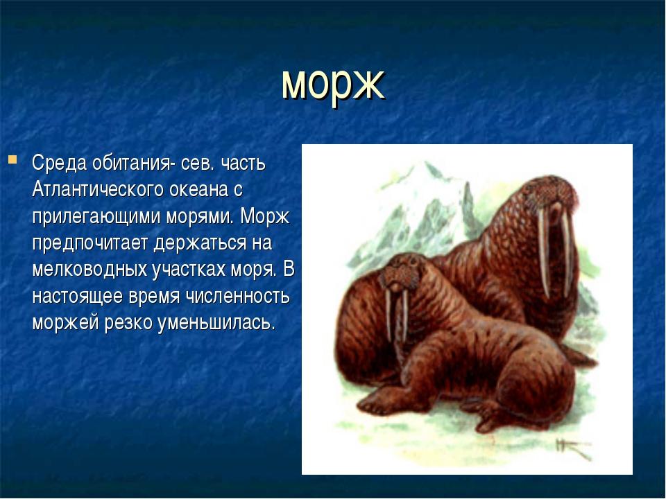 морж Среда обитания- сев. часть Атлантического океана с прилегающими морями....