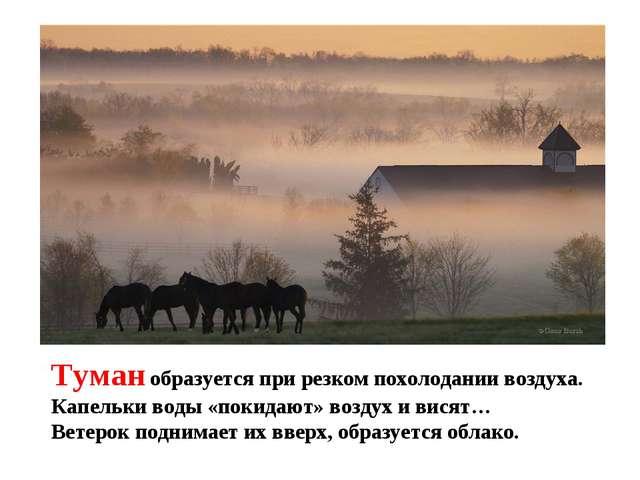 Туман образуется при резком похолодании воздуха. Капельки воды «покидают» воз...