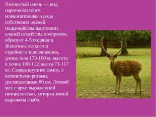 Пятнистый олень — вид парнокопытного млекопитающего рода собственно оленей по