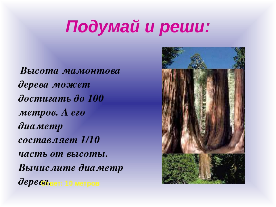 Подумай и реши: Высота мамонтова дерева может достигать до 100 метров. А его...