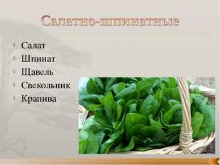Салат Шпинат Щавель Свекольник Крапива