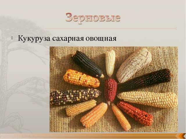 Кукуруза сахарная овощная