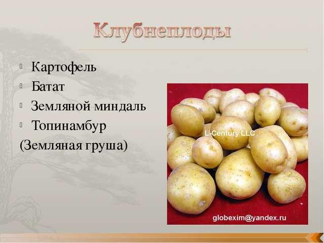 Картофель Батат Земляной миндаль Топинамбур (Земляная груша)