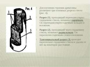 Для изучения строения древесины различают три основных разреза ствола (рис. 4